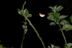 moon_eclipse1